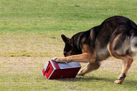 How To Train Your Dog To Search For Things