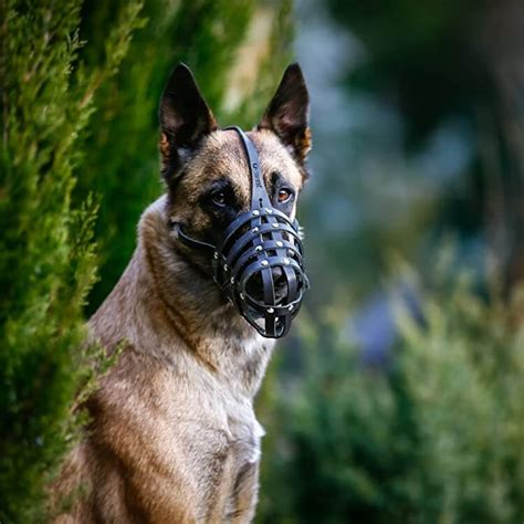 How To Train Your Dog To Wear A Muzzle