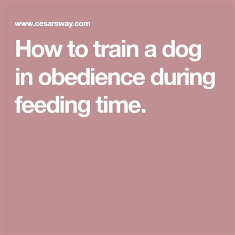https www.cesarsway.com dog-training obedience the-feeding-ritual-working