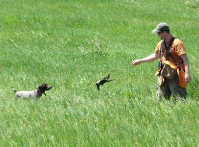 Hunting Dog Training Mn