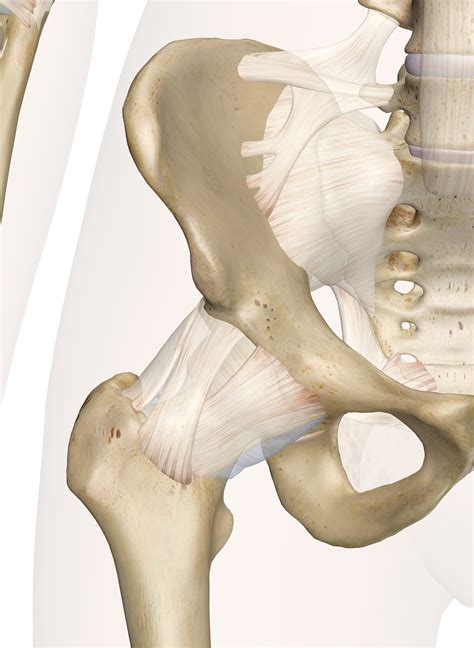 images of the hip bones and joints
