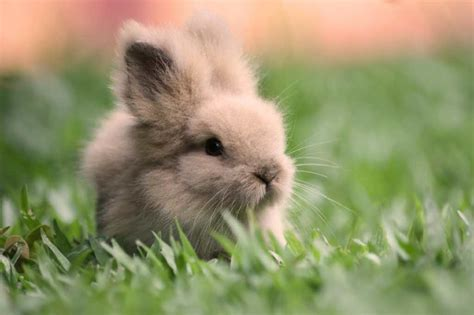 information about rabbits