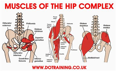 internal rotator muscles of the hip