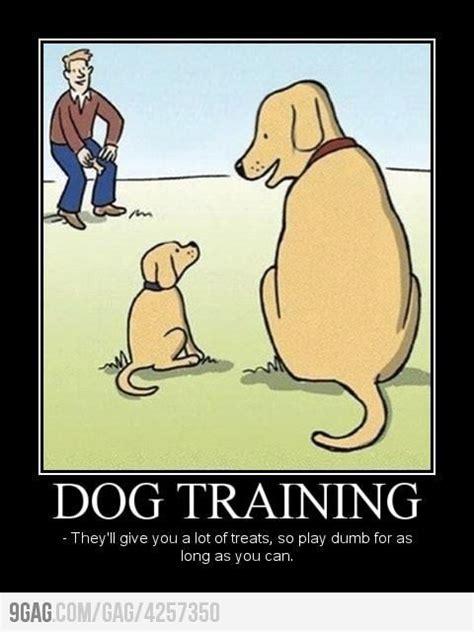 Jokes About Dog Training