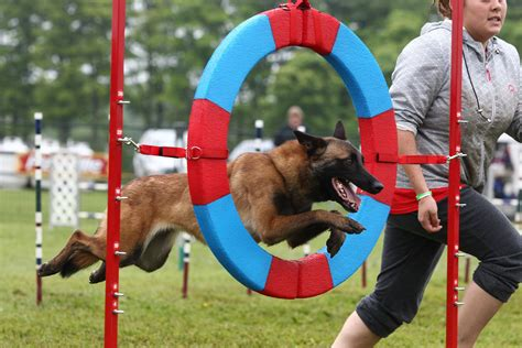 joondalup dog agility training