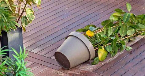 Kübelpflanzen Gegen Wind Sichern
