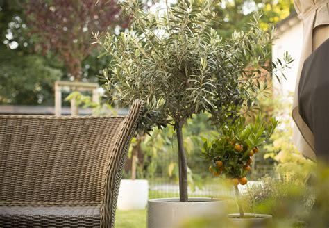 Kübelpflanzen Nach Draußen