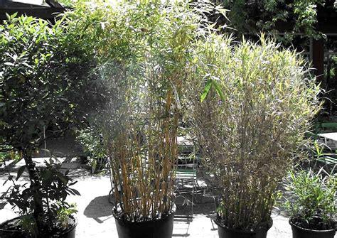 Kübelpflanzen Winterhart Sichtschutz