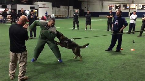k-9 dog training video