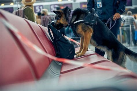 k-9 dogs trained to sniff nicotine