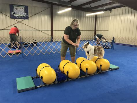 k9 dog agility training centre