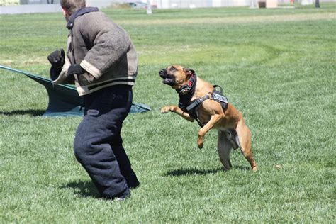 k9 dog training club video review