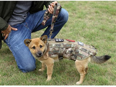k9 dog training gear