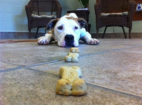 k9 dog training greensboro nc