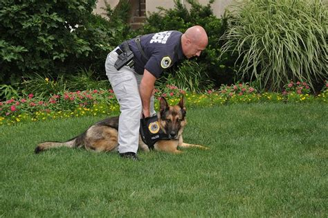 k9 dog training hereford