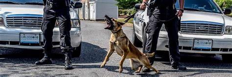 K9 Dog Handler Training