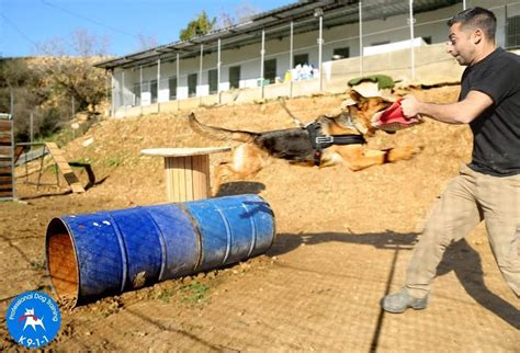 k911 dog training colorado