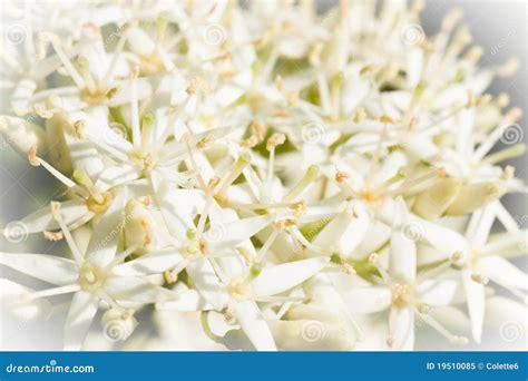 Kleine Weiße Frühlingsblumen Stockfoto Bild 35227573 Alamy