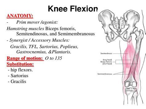 knee flexion antagonist muscle