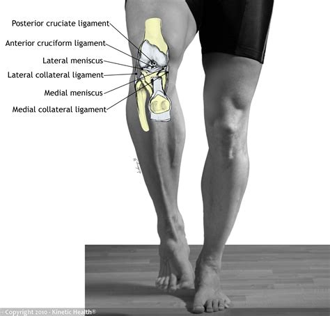 knee tendons and ligaments injuries