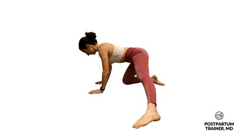 kneeling hip flexor stretch muscles around scapula ligaments