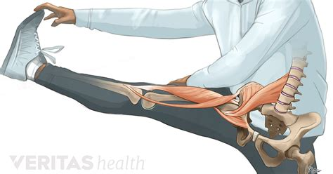 left hip flexor anterior pain in shoulder