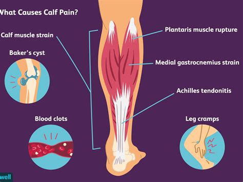 left rear knee tendons and ligaments