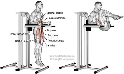 leg raises using hip flexor machine to squat or not to squat dictionary