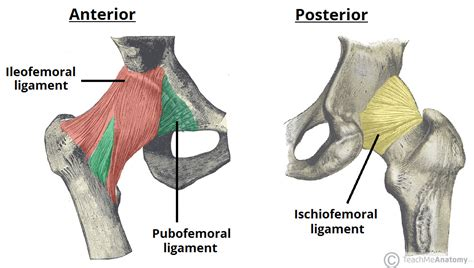 ligaments in the hip joint