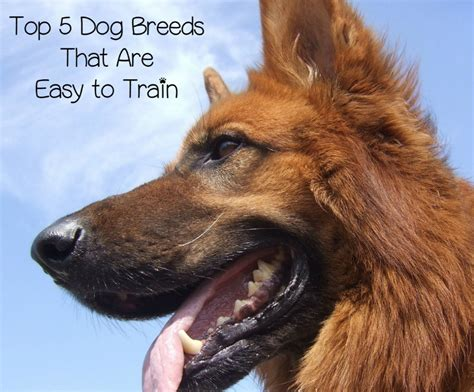 List Of Easy To Train Small Dogs
