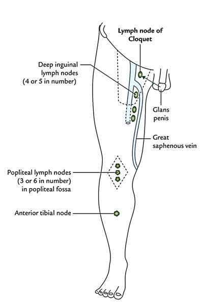 location of lymph nodes in legs location lyrics