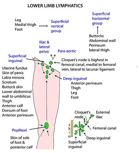 location of lymph nodes in legs location lyrics clean