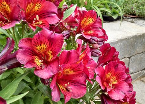 Long Blooming Annuals