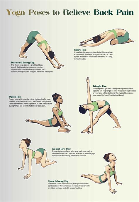 lower back pain exercises and stretches pics of dogs