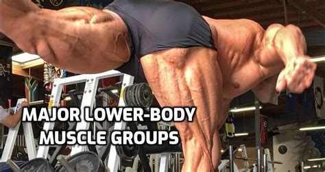 lower extremity hip musculature bodybuilding exercises for the back