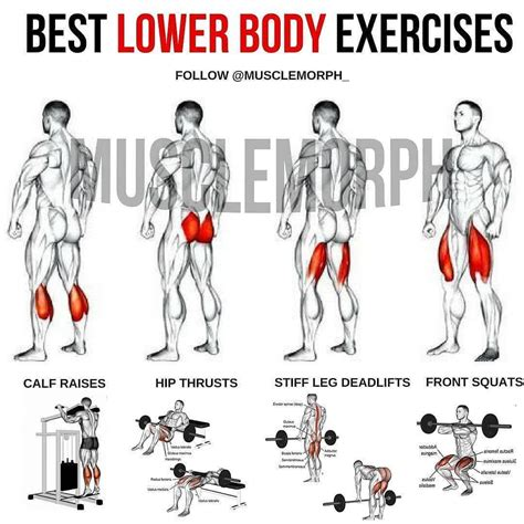 lower extremity hip musculature bodybuilding exercises pictures