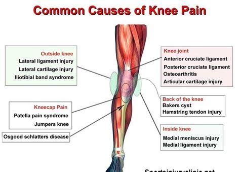 lower left side of knee pain
