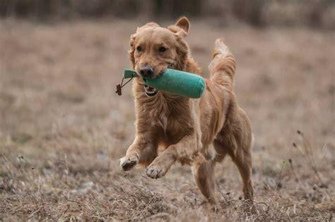 Maintaining Dog Training