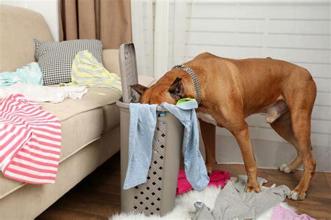 Mature Dog Training