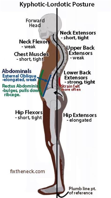 measuring hip flexor tightness pelvis diagram hip flexor
