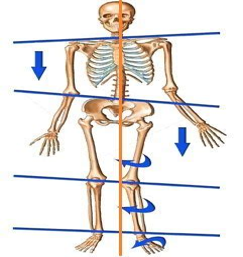 measuring hip flexor tightness pelvis labeled x-ray of pelvis