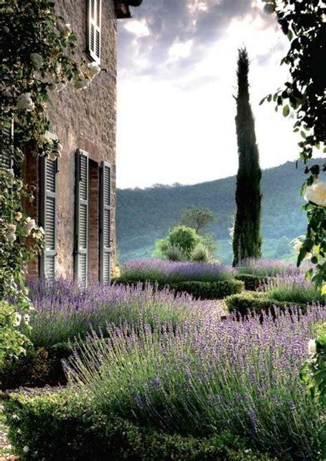 Mediterraner Garten Lavendel