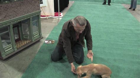 Mike Wombacher Dog Training