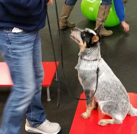 Mind Your Manners Dog Training Vancouver