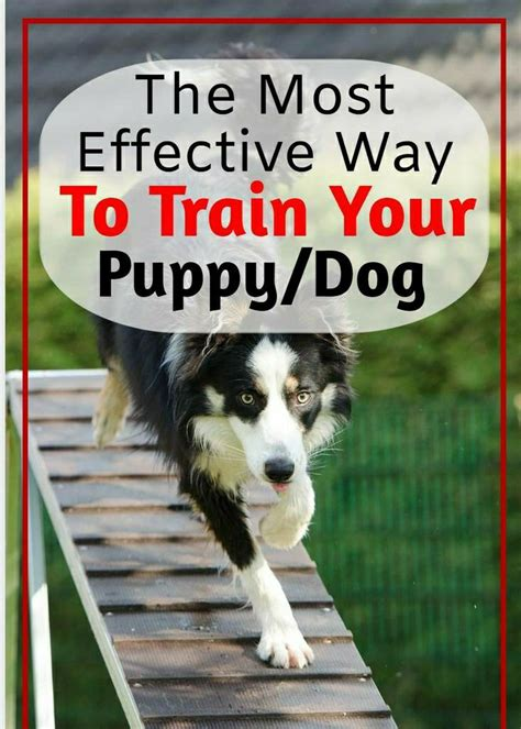 Most Effective Way To Potty Train Your Dog