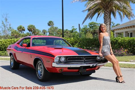 Muscle Blues - Tattersalls Sales Company.