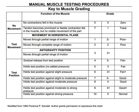 [pdf] Muscle Grading And Testing Procedures.