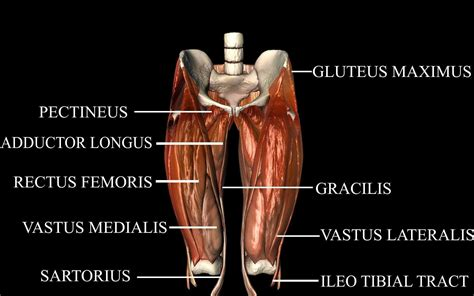muscles in the hip joint