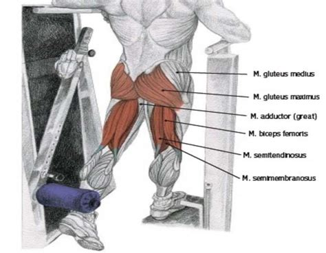 muscles of hip extension