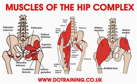 muscles of hip internal rotation range